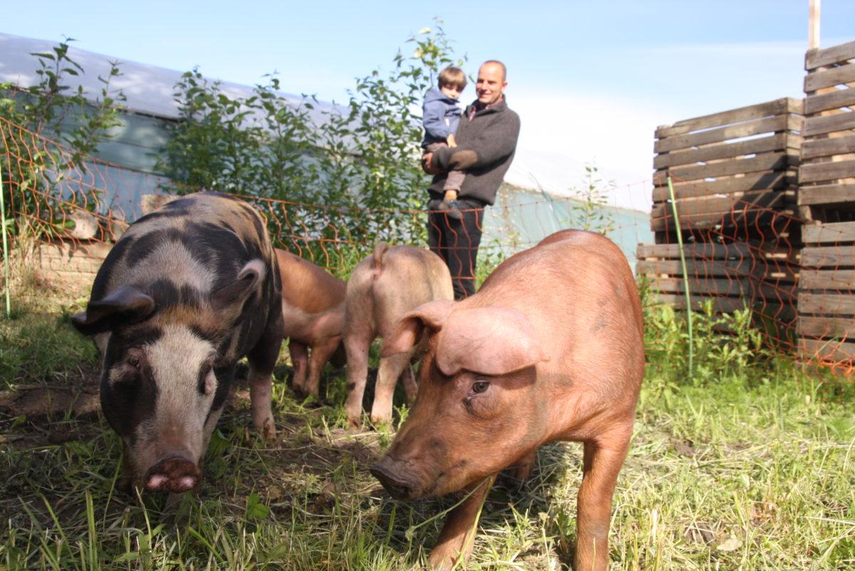 Økologisk svinekjøtt: - Kjøtt fra gris som får bevege seg fritt og som spiser alt mulig, smaker mye bedre enn kjøtt fra gris som står i bås inne, sier Pierre Sachot.